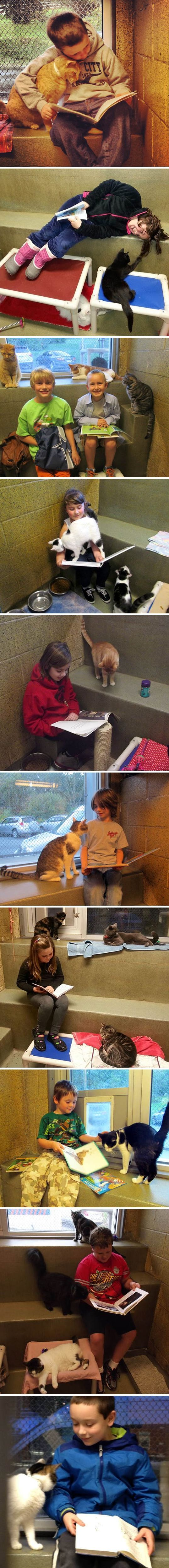 Every shelter should have a similar program: Children Read To Shelter Cats To Soothe Them - At Animal Rescue League of Berks County, children can read to shelter cats to soothe them. The cats adore them and are always delighted to have these little humans there to keep them company.