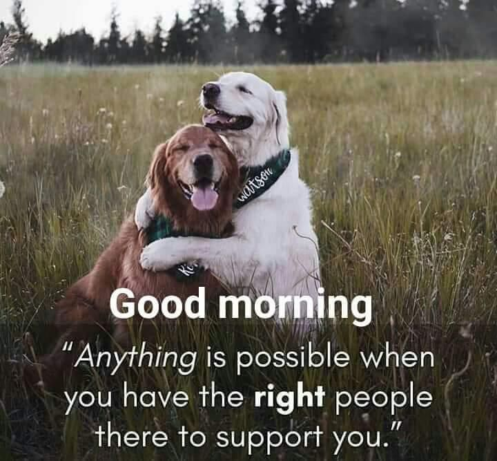 Good Morning Sister Have A Nice Day And Happy New Week Funny Good Morning Quotes Good Morning Quotes Good Morning Gif Funny