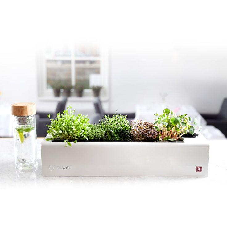 Assortiment de plante d'interieur