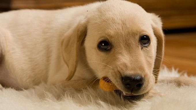 Marre de dépenser de l'argent dans les gâteaux pour chien ? Ces petites friandises pour toutous sont loin d'être données... Et leur composition fait un peu peur : que des trucs bizarres ded...