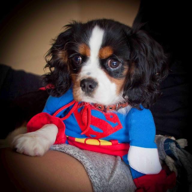 She's a supergirl hahaha #cute #puppy