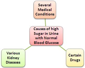 Causes of High Sugar in Urine: QUESTION: I have done my lab tests and it was high sugar in urine, but blood sugar level was normal? Is it possible to have normal sugar level in blood