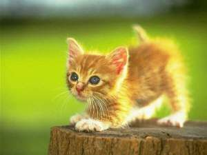 Adorable Kitten Cute Cats I love this one. Click to see more like this!