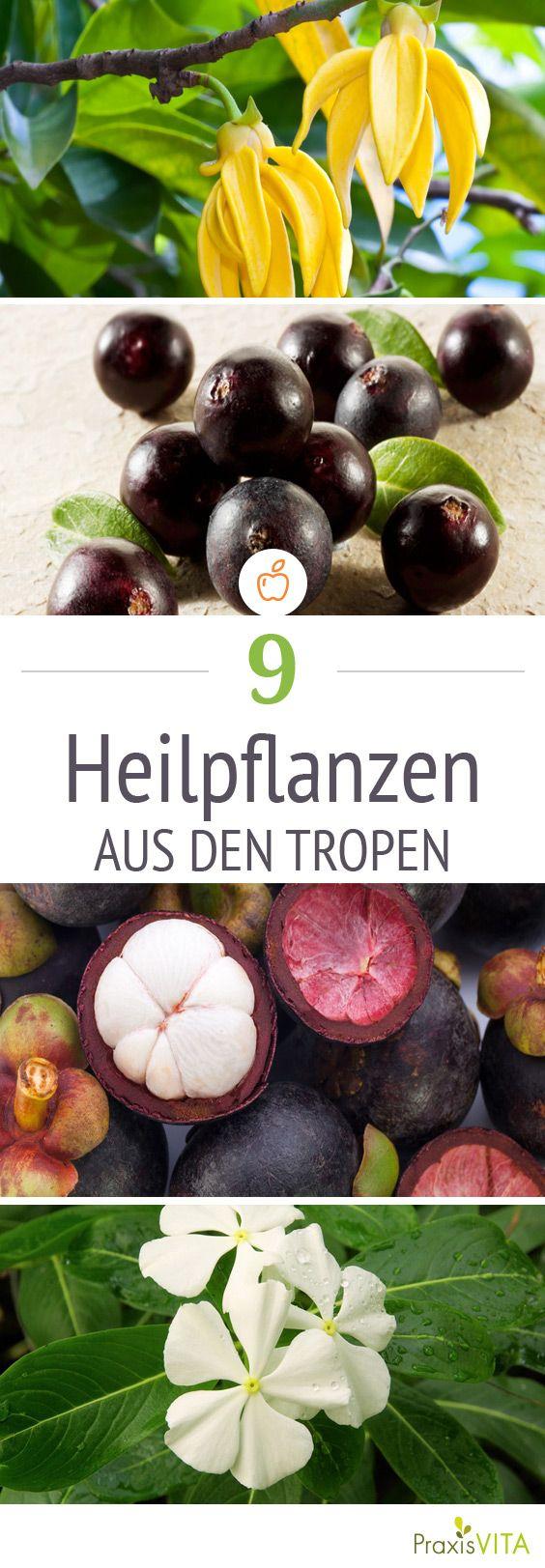 Tropische Früchte, Pflanzen und Wurzeln: Diese gesunden Exoten stärken unsere Abwehrkräfte.