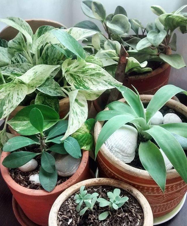 Cositas q me hacen feliz 🌵🌾🌿🍀🌳🌱🌷🌸😍💕 Suculentas, míami y ephorbia - planta - plants