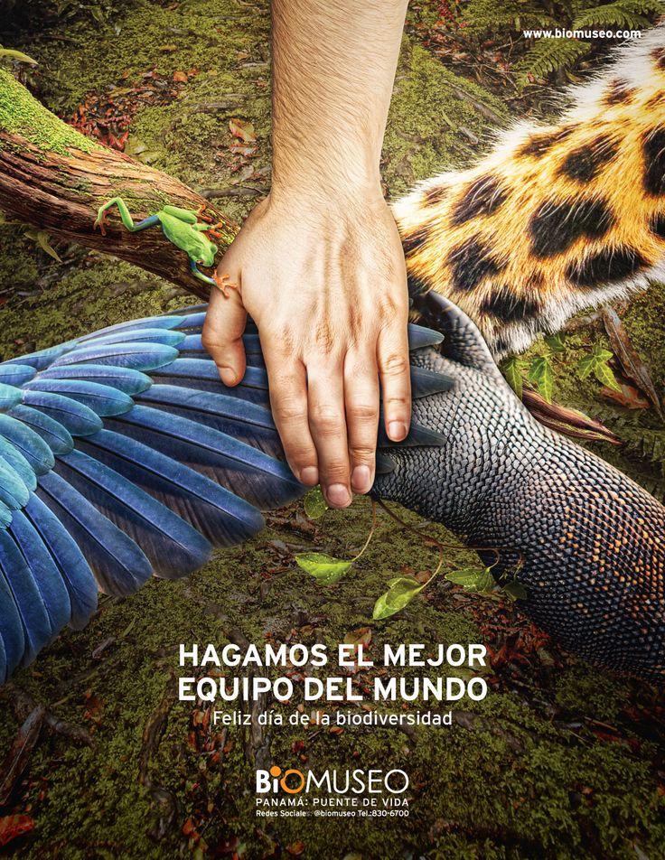 Biomuseo - día de la biodiversidad on Behance