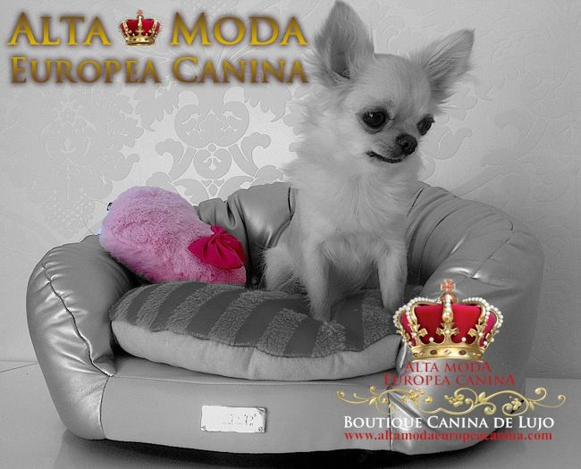 73 best images about cama perros on pinterest diy dog for Cama para perros
