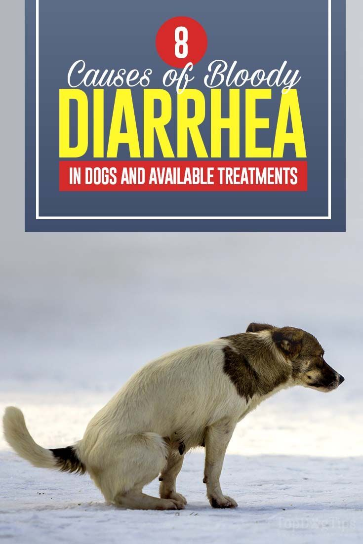 Dog Diarrhea Remedy 2 Ingredients Dog Diarrhea Remedy Dog Has