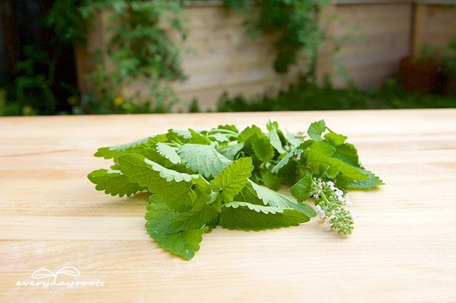 peppermint deters mice and a variety of other pests