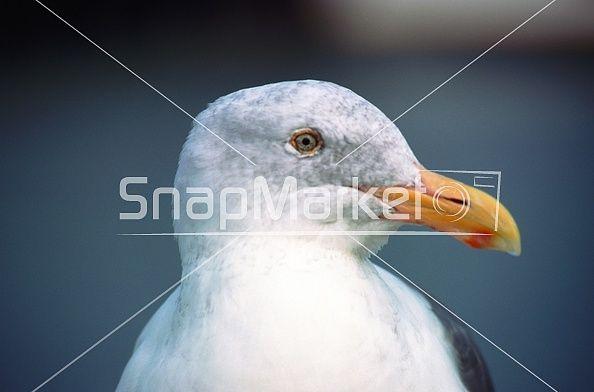 Stock Image: Close Up Bird