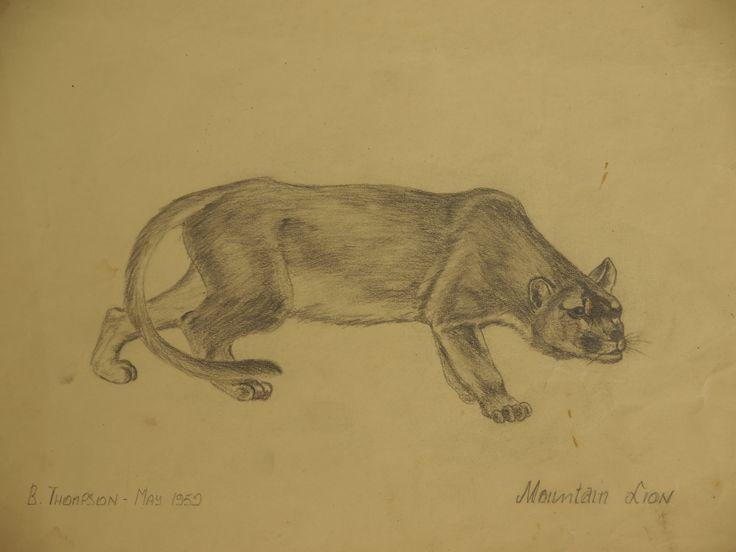 Cougar or mountain lion.