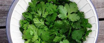 Concerned with Fukishima Radiation? Eat these foods: cilantro, apple pectin, spirulina, and more.