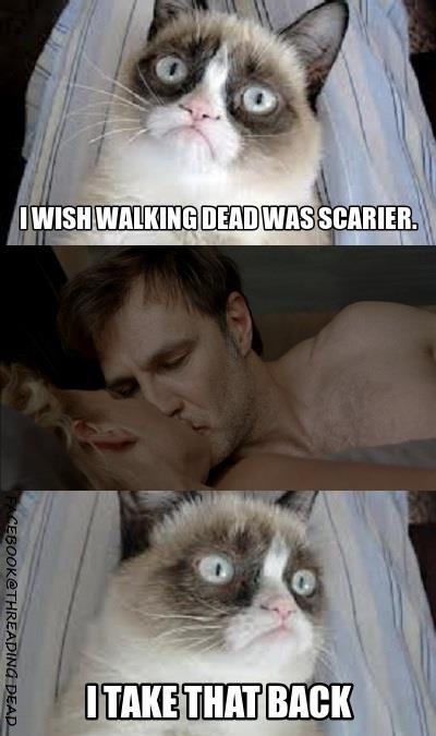 Asian kitty dead
