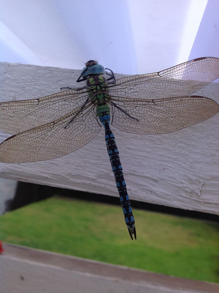 Dragon fly on the terrace