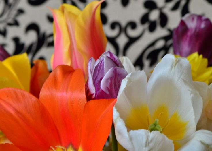 This year, my tulips came in when I was out of the house. I gathered them up and brought them in for photos shoots-here against my new dining room chair. They look pretty happy, no?