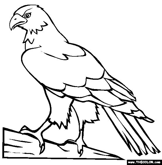 perched hawk coloring page free perched hawk online coloring