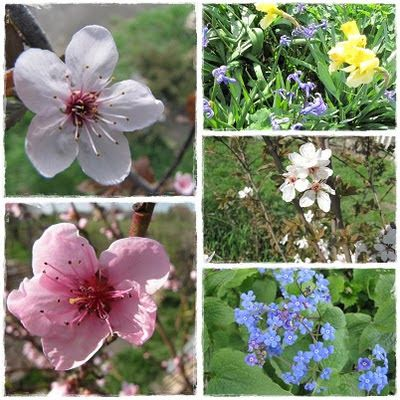 Ajánljuk: Április a kertben, http://kertinfo.hu/aprilis-a-kertben/, ezekben a témakörökben:  #Díszkert #Fűszer #Kert #Kéziszerszámok #Konyhakertieszközök #Mag #napló #Öntözés #Tanácsésötlet #Tavaszi, írta: Ilkertje A cikket itt olvashatod http://kertinfo.hu/aprilis-a-kertben/