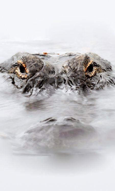 cocodrilos...terror in the water
