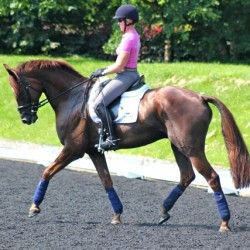 From Dressage Today: Dressage Training Exercises to Calm Your Hot Horse - Eventing Nation - Three-Day Eventing News, Results, Videos, and Commentary
