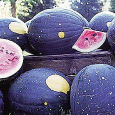 Moon and Stars watermelon.  I love this ones looks.  no idea how it tastes.