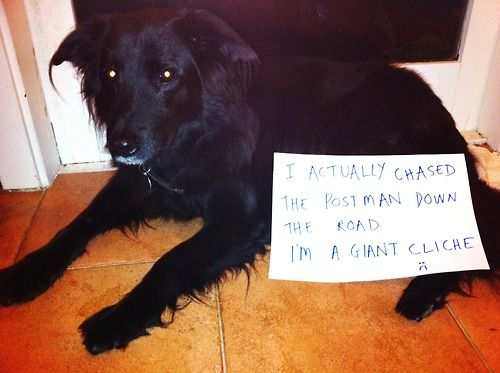 Hysterical dog confessions!!!  I actually chased the postman down the road I'm a giant cliché