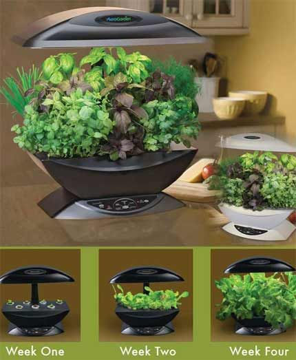 Aero garden future gardening designs i love pinterest for Design indoor herb garden