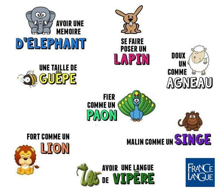 20 wyrażeń związanych ze zwierzętami - słownictwo 3 - Francuski przy kawie