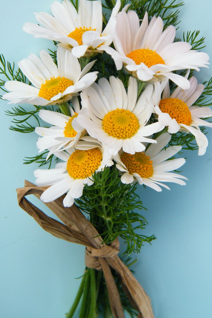 small bunch of daisies