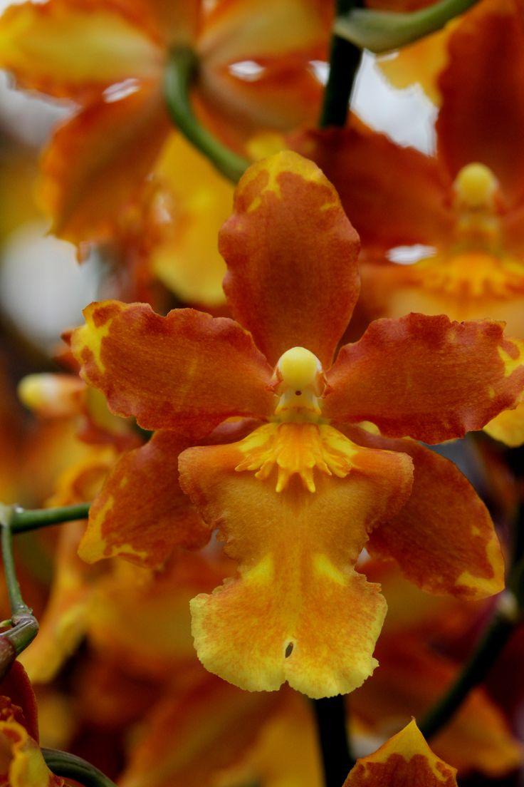 Orchidee, foto Leen de Ruiter