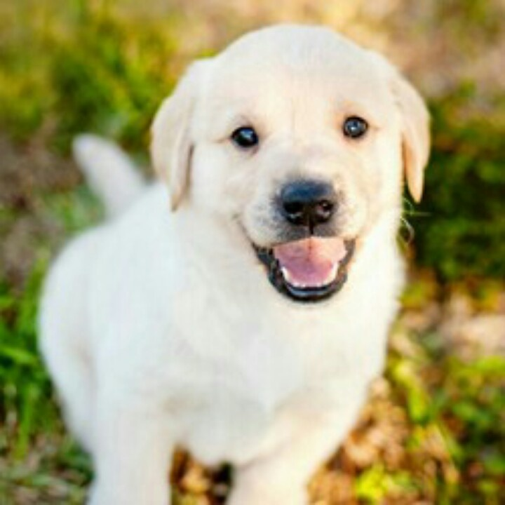 Southeastern Guide Dogs Puppy Cam