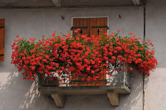 Balconi fioriti a Sampeyre | Flickr - Photo Sharing!