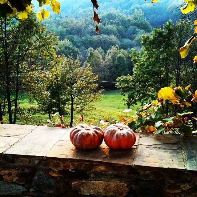 #autunno #beiguashire #picoftheday #happy #colori #zucche