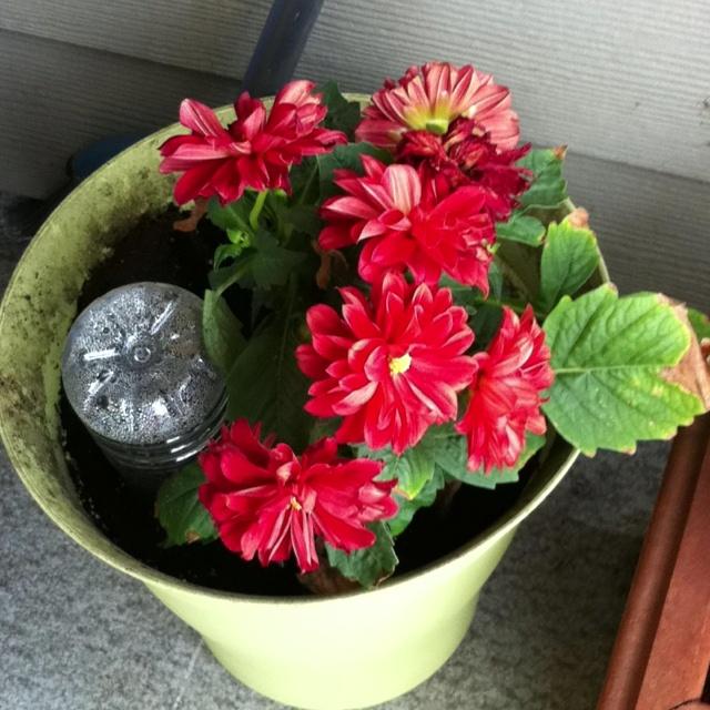 DIY aqua globes. Take old water bottle add water push into