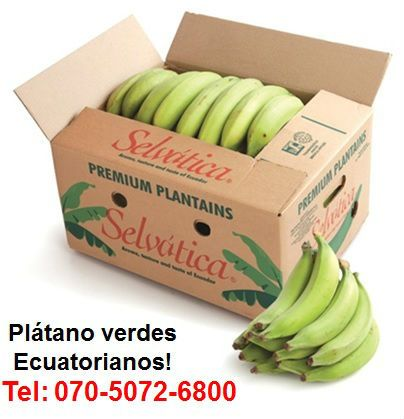 Selvatica-platatins HIGH QUALITY PVE