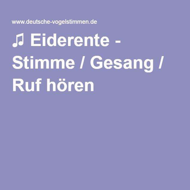 ♫ Eiderente - Stimme / Gesang
