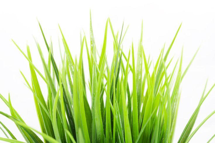 Freshness. Green Bright Grass  Photograph by Nadezhda Tikhaia #NadezhdaTikhaiaFineArtPhotography #ArtForHome #HomeDecor #Grass #Green #InteriorDesign #FineArtPrints