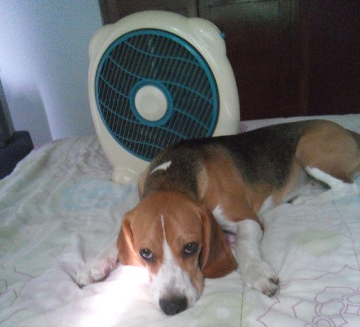 Tengo calor