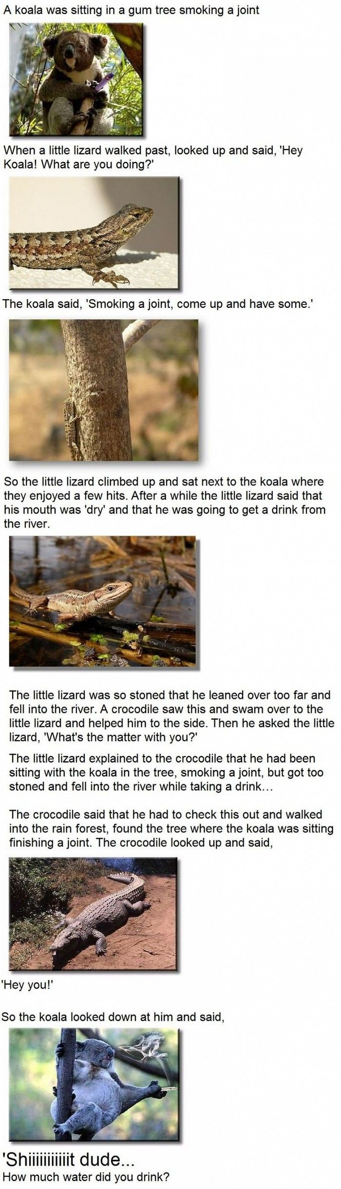 LizardsFunny Lizard Jokes
