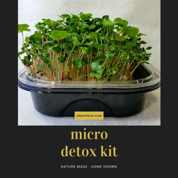 Micro Detox Kit, Natural Detox Kit of Broccoli and Radish Microgreens