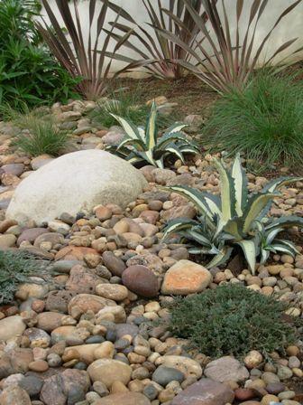 Drought-Resistant La Beautiful gorgeous pretty flowers