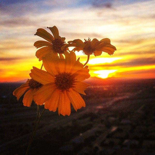 Image Of Sunny Arizona Pools: 17 Best Images About Arizona Sunsets On Pinterest