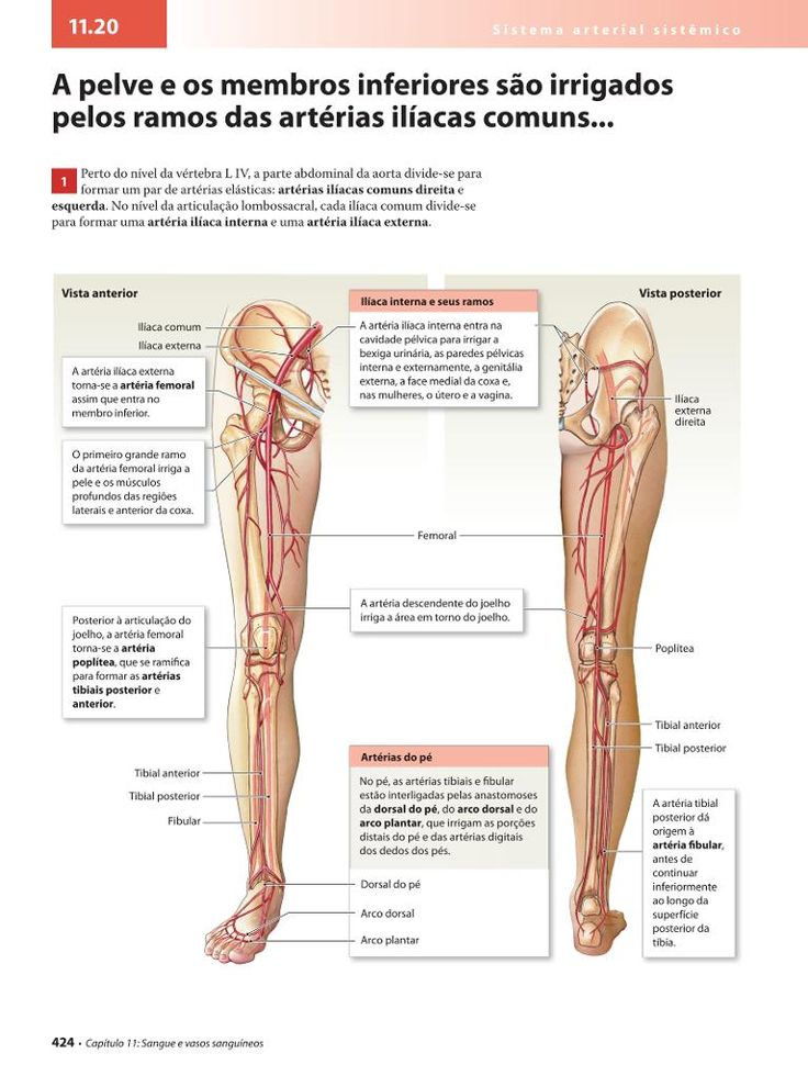 The 14 best Anatomia images on Pinterest