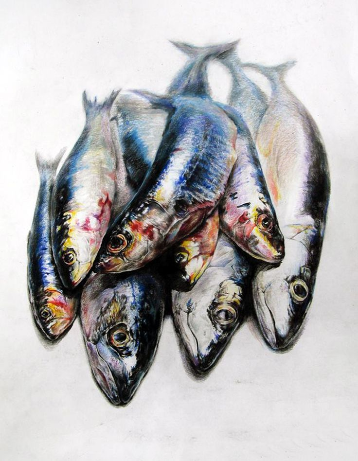 생선' (4절 켄트지 / 수채화 & 색연필)