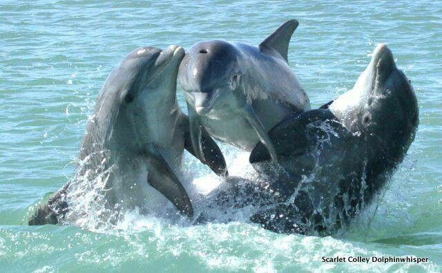 images of dolphins playing - photo #17