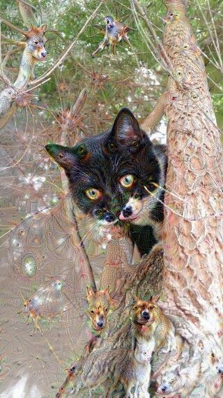 Kitty cat dreams