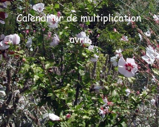 Calendrier de multiplication avril Bouturer en avril