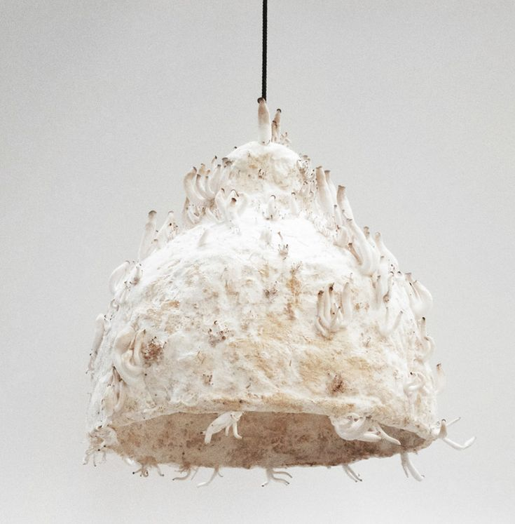 jonas edvard nielsen grows MYX lamps from mushroom-mycelium
