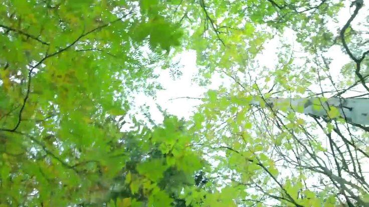 Hyvän mielen metsäkävely kesä video