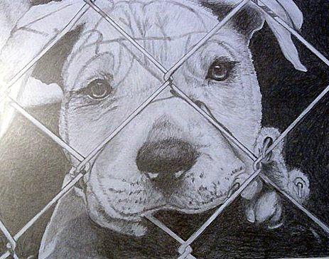 7 best drawings pitbulls images on Pinterest | Pit bull ...