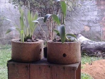 Google+ (vaso 16cm com orquídeas)